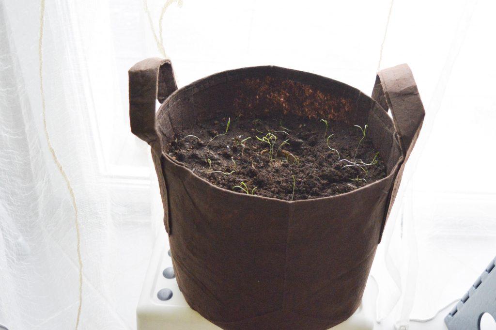 Bienvenue chez vero - Mon petit coin vert - une box pour débuter en jardinage bio - Carottes en pot entier