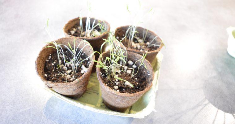 Mon petit coin vert : une box pour débuter en jardinage bio