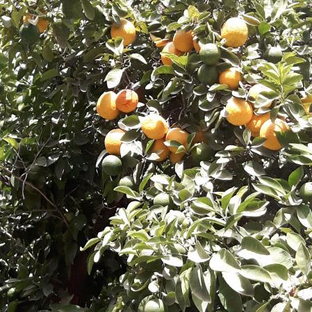 Bienvenue chez Vero - Palais Bahia - Oranges