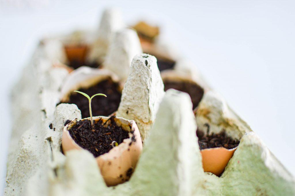 utiliser ses coquilles d'oeufs en jardinage - boite d'oeufs
